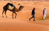 <h5>2011 Sahara</h5>